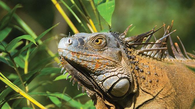 The Best of Costa Rica: Exploring Natural Wonders