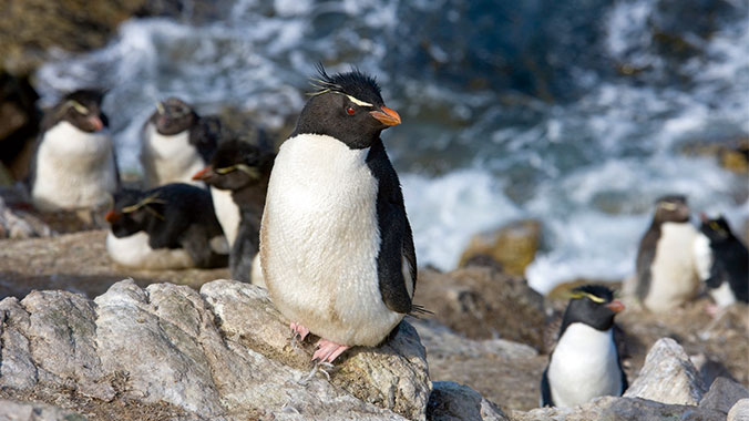 Beyond Antarctica: South Shetlands, South Georgia & the Falklands