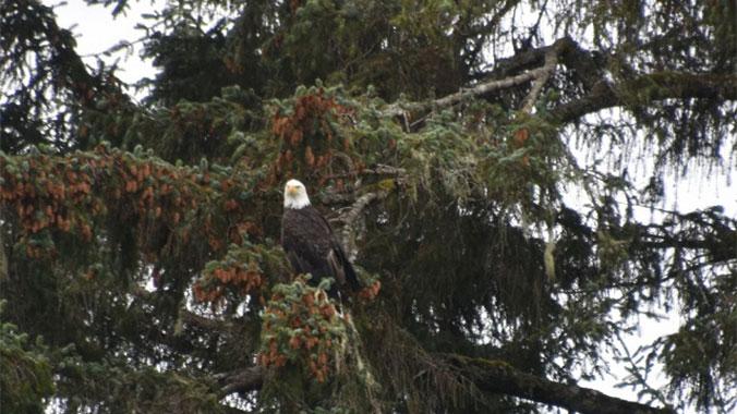 Passport to Southeast Alaska: By Hiking Boot, Kayak & Boat
